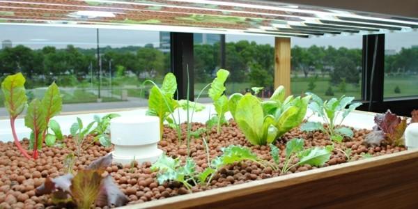 aquaponik nachhaltiger gemüseanbau