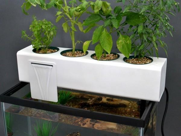 aquaponik system aquarium
