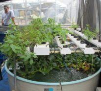 Aquaponik – So könnte die Zukunft der nachhaltigen Lebensmittelproduktion aussehen!