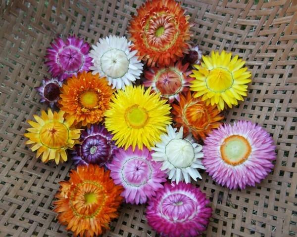 deko mit blüten strohblume