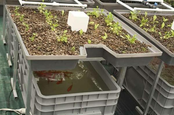 aquaponik system selber bauen