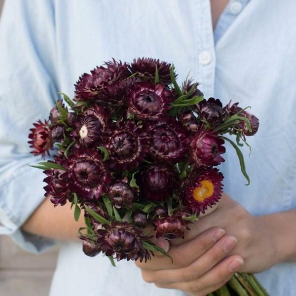 dunkel violette blüten strohblume blumenstrauß