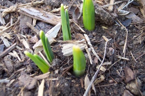 erste anwachsende Pflanzen Gartenpflege