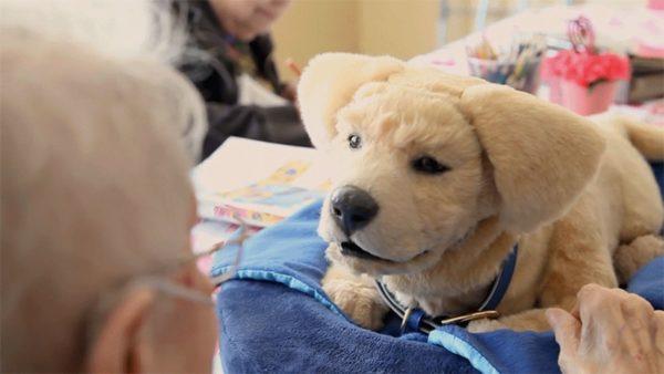 hund und frau hunderoboter