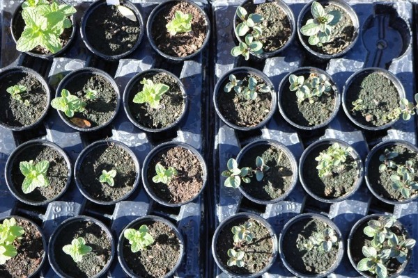 kleine und toll geordnete Blumentöpfe Gartenpflege