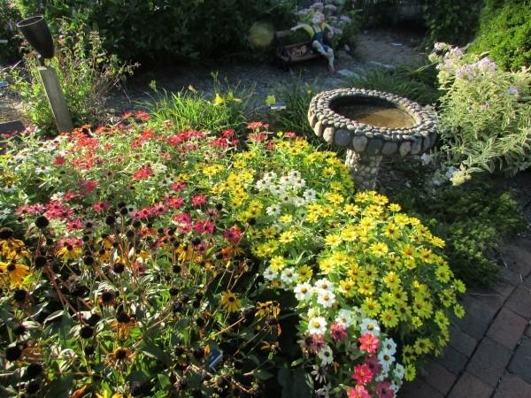 mehrere tolle Blumen Gartenpflege