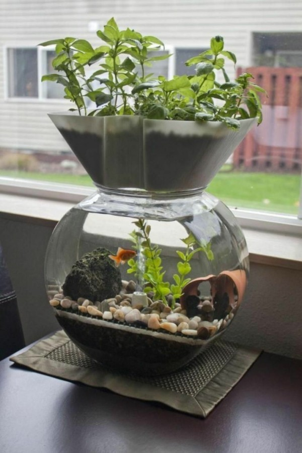 mini aquaponik idee aquarium