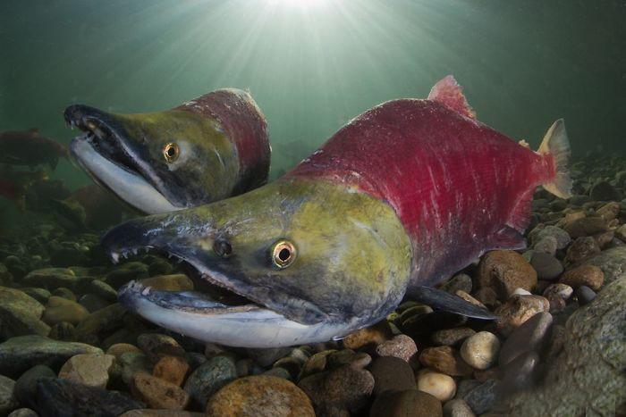 super toller fisch unterwasserbilder