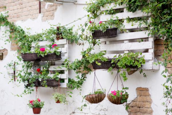 Gartentipps für jedermann Hängepflanzen in Blumenampeln Töpfen