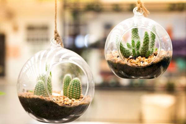 Gartentipps für jedermann Kakteen im Glas