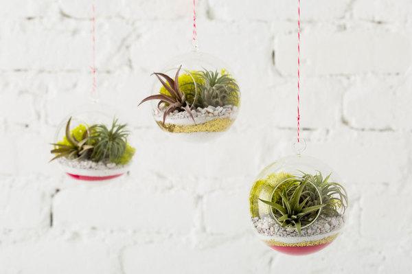 Gartentipps für jedermann Luftpflanzen im Glas