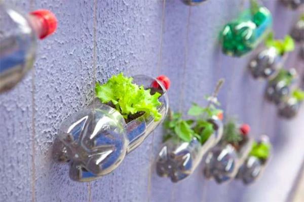 Gartentipps für jedermann Plastikflaschen als Blumengefäße gebrauchen