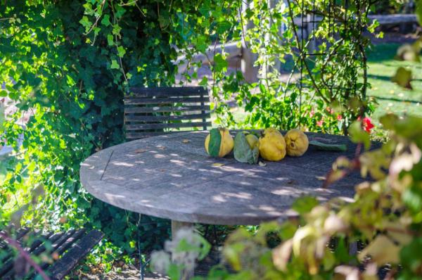 Gartentipps für jedermann Sitzecke im Grün Quitten auf dem Tisch