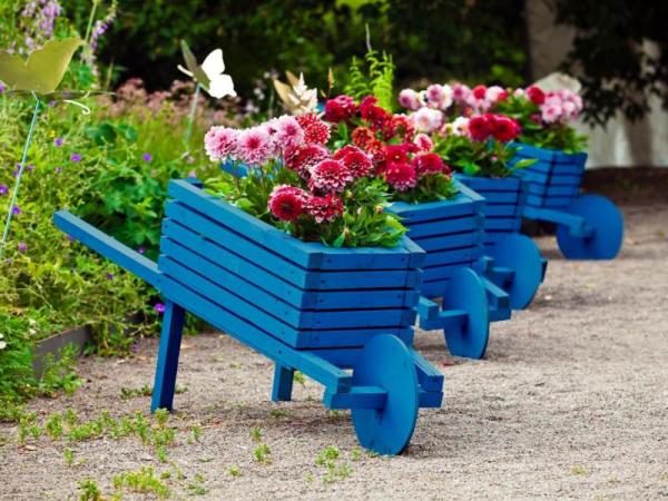 Gartentipps für jedermann alte Holzkarren in Blau anstreichen Dahlien einpflanzen Highlights im Garten