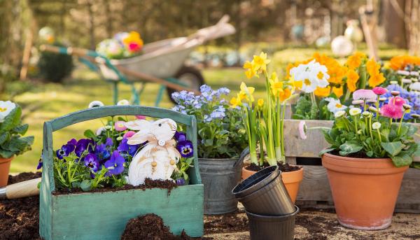 Gartentipps für jedermann gelbe Narzissen lila