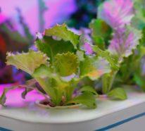 Hi-Tech Vertikaler Garten GrowChef – Grüne Pflanzen für jeden Tag!