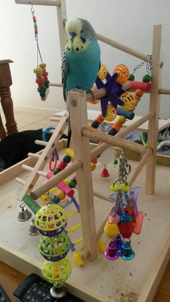 Spielzeug für Wellensittiche basteln Wellensittich Spielplatz