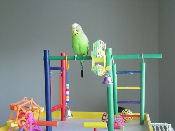 Wellensittich Spielplatz DIY Vogelspielzeuge