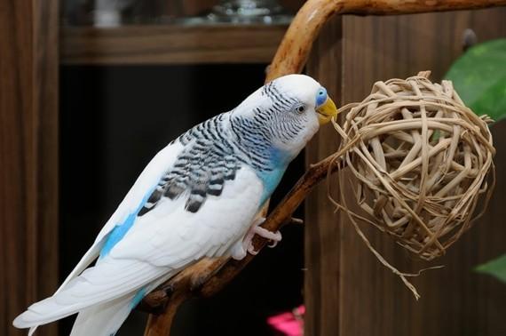 Wellensittich Spielzeug DIY Vogelspielzeuge Rattankugeln