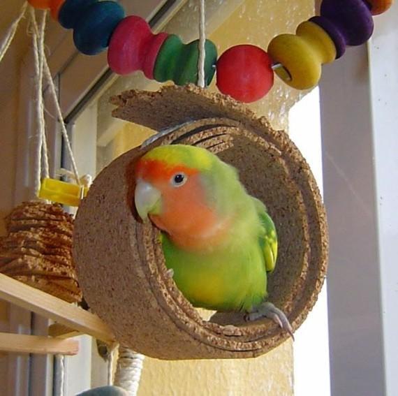 Wellensittich Spielzeug selber bauen DIY Vogelspielzeuge Kork