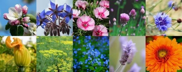 essbare blüten gesund