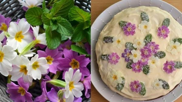 essbare blüten primeln kuchen