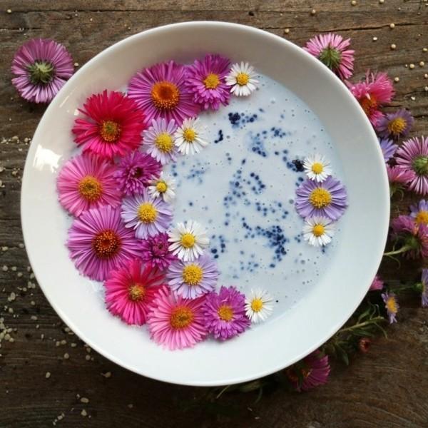 gänseblümchen frühstück
