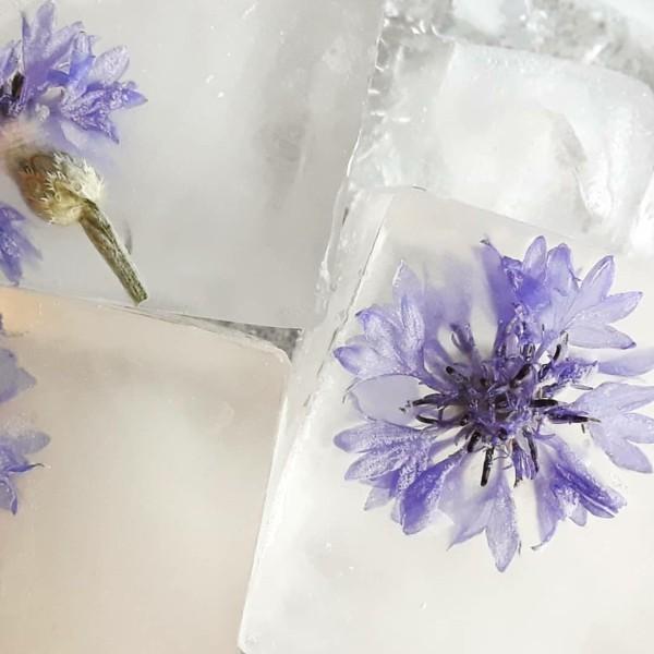 kornblume eiswürfel essbare blüten