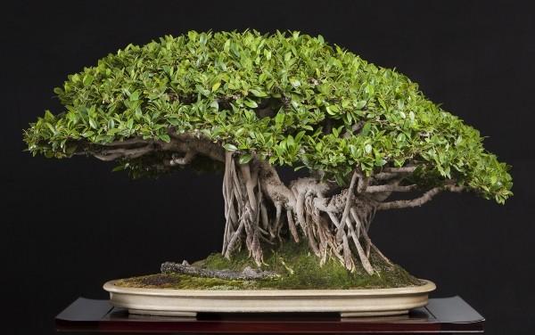 Bonsai Baum Hut und tolle Textur
