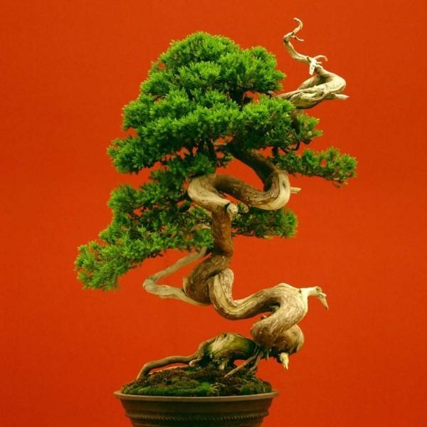 Bonsai Baum Ovale Idee