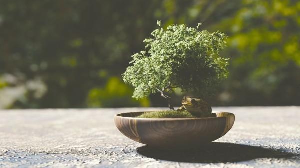 Bonsai Baum Terrasse - Idee