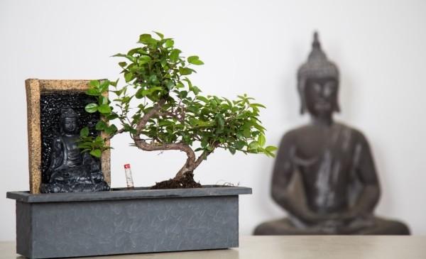 Bonsai Baum Zen Idee