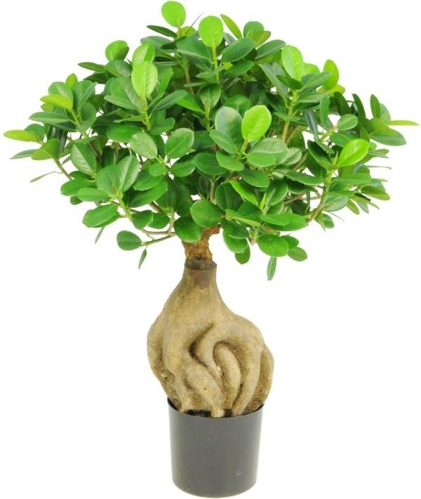 Bonsai Baum mit sehr lustiger Erscheinung