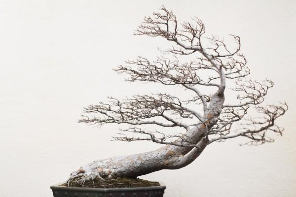 Bonsai Baum skandinavische idee