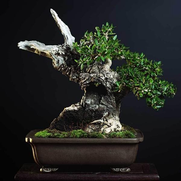 Bonsai Baum - tolle Schere und Blätter
