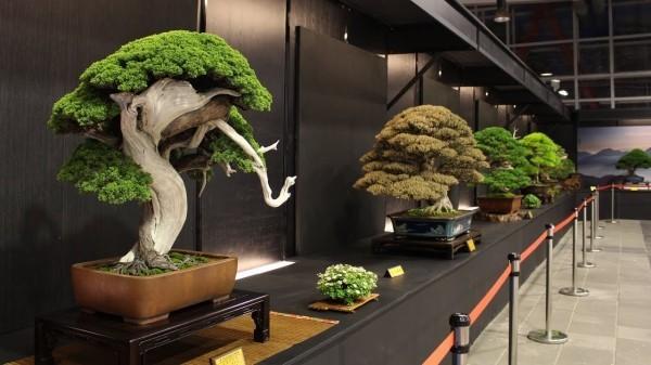 Bonsai Baum - tolles Museum