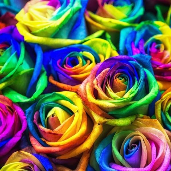 Farbsymbolik der Rosen Farbmix künstlich gefärbt ideen
