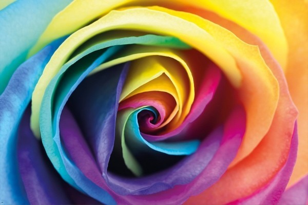 Farbsymbolik der Rosen Farbmix künstlich gefärbt