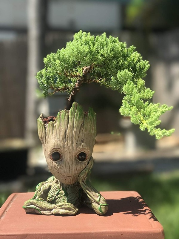 Lustige Interpreatation - Bonsai Baum