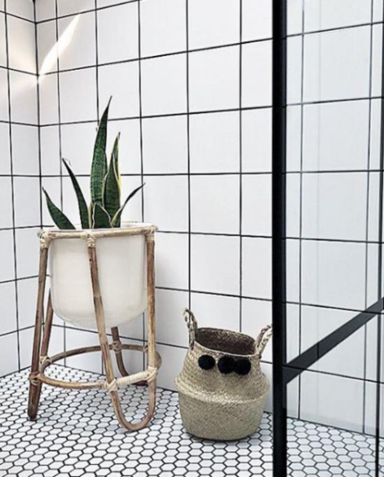 Pflanzen fürs Bad Bogenhanf im modern gefliesten Badezimmer