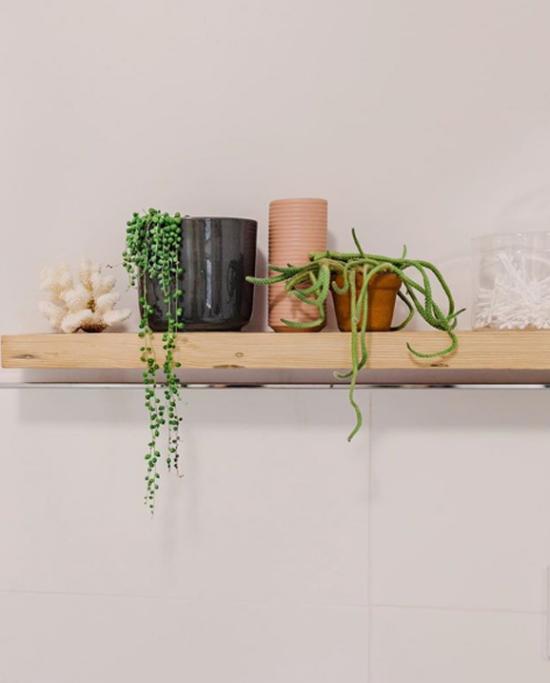 Pflanzen fürs Bad Erbsenpflanze Perlenschnur macht eine gute Figur im Bad