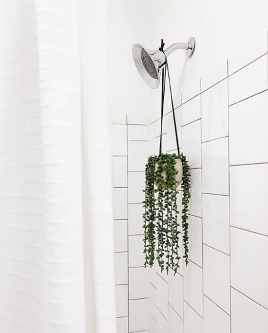 Pflanzen fürs Bad Erbsenpflanze ideal für den nassen Raum
