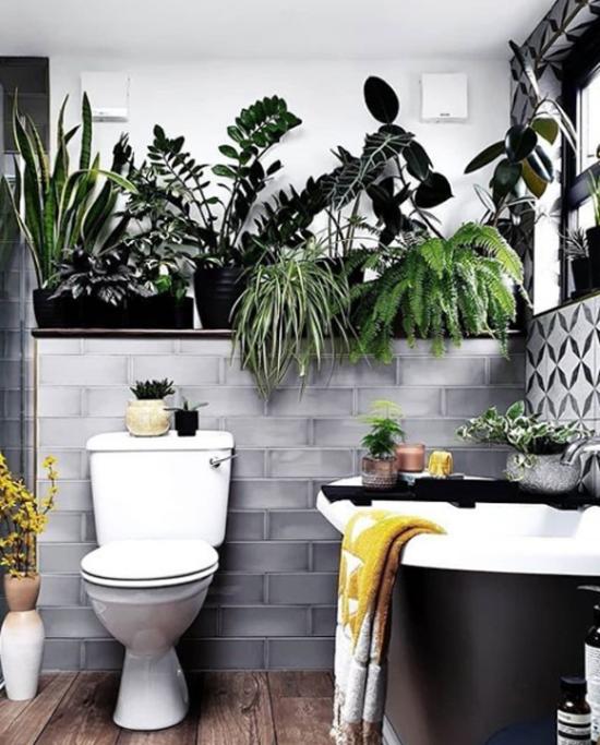 Pflanzen fürs Bad Glücksfeder neben Bogenhanf Grünlilie Farn im Bad