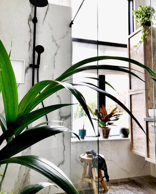Pflanzen fürs Bad Marmor Hintergrund Schusterpflanze grüne Blätter