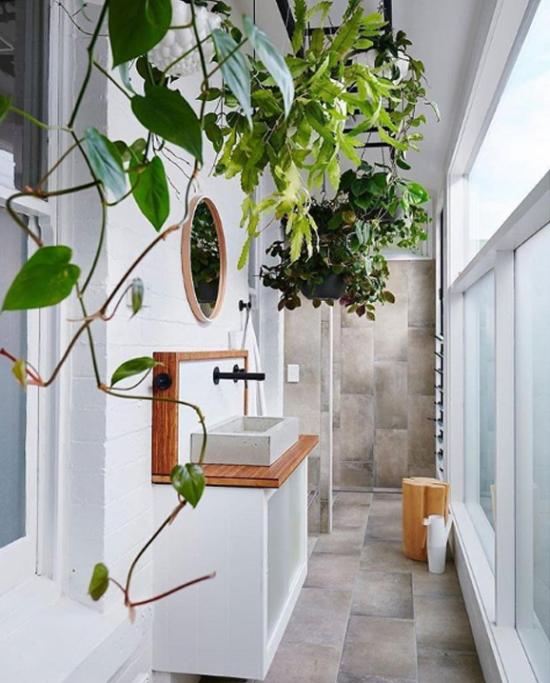Pflanzen fürs Bad an der Wand gegenüber einem großen Fenster viel Tageslicht