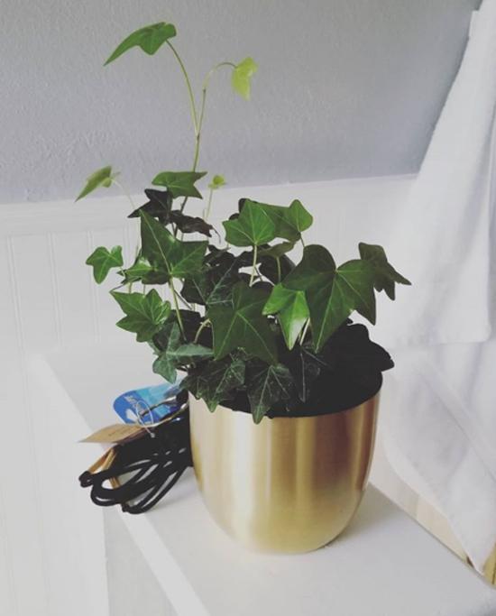 Pflanzen fürs Bad gemeiner Efeu grüne Note im Bad