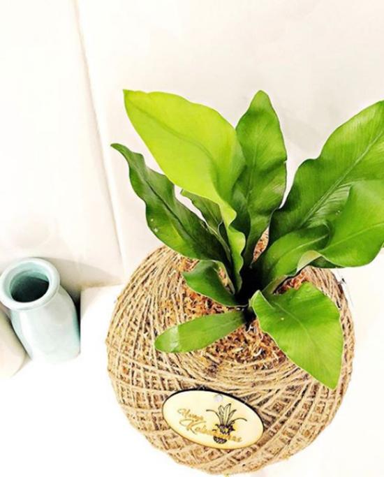 Pflanzen fürs Bad grüne Pflanze richtiger Blickfang