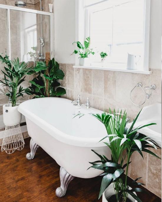Pflanzen fürs Bad großes Fenster viele Pflanzen gemütliche Atmosphäre einladend und beruhigend