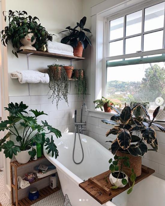Pflanzen fürs Bad heller Raum viel Licht großes Fenster viele Pflanzen