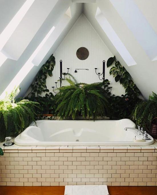 Pflanzen fürs Bad robuste Farne bringen echtes Jungle-Feeling ins Badezimmer